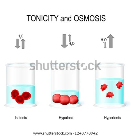 Isotonic Hypotonic Hypertonic Solutions Effects On Stock Vector