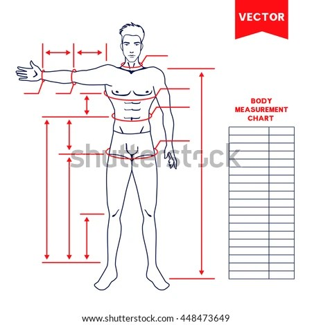 picture relating to Printable Body Measurement Chart identified as Size Chart