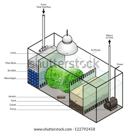 Refugium Filter Setup Aquarium Stock Vector (Royalty Free) 122792458