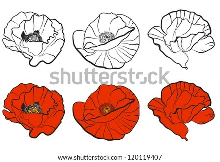 Three Different Bud Poppy Template Your Stock Vector (Royalty Free