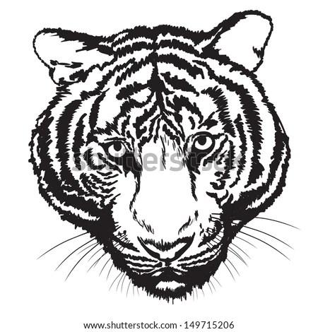 Tiger Sketch Free Hand Digital Brush Stock Vector (Royalty Free