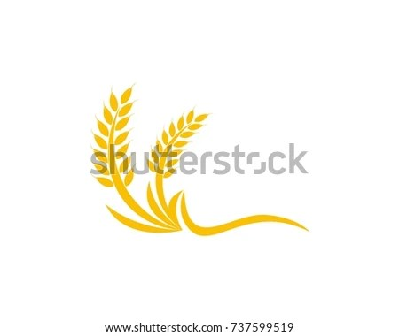 Wheat Rice Logo Design Template Stock Vector (Royalty Free - wheat template