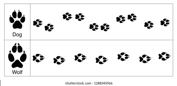 image relating to Free Printable Animal Tracks identified as Wolf Music Pictures, Inventory Illustrations or photos Vectors Shutterstockforest