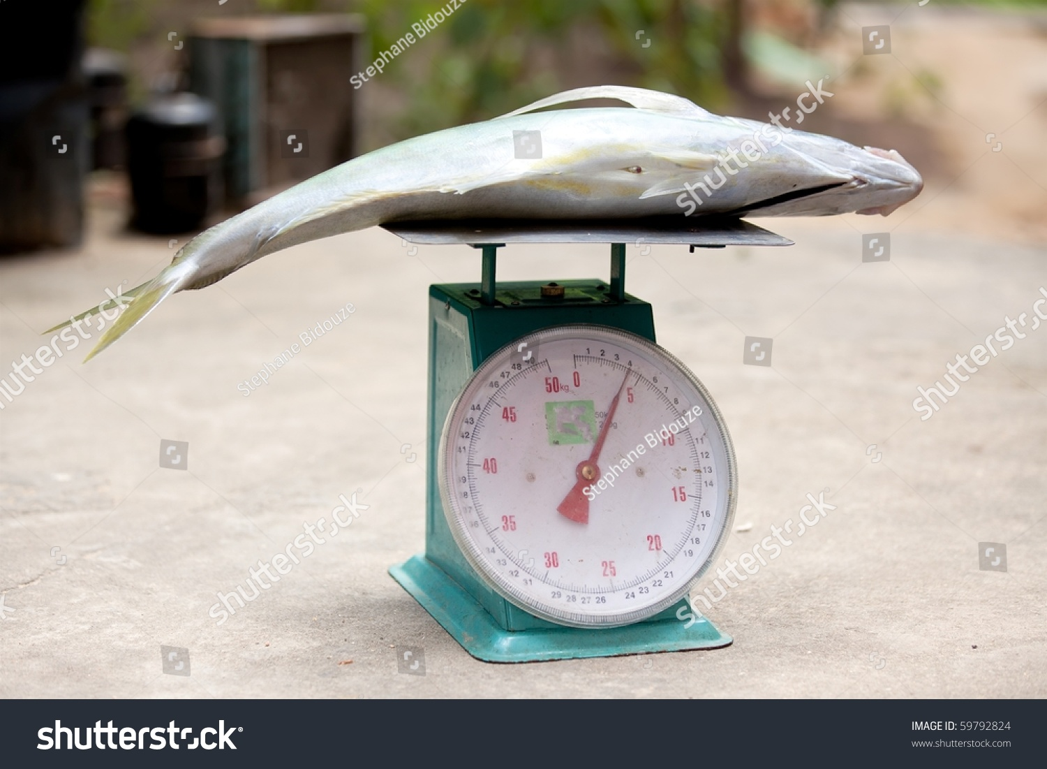 Libras A Quilos 4 Kilograms Fish On Libra In Asian Market Stock Photo