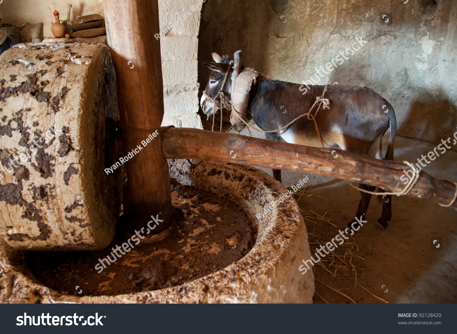 Animal Crush Donkeypowered Olive Oil Press Which Animal Stock Photo Edit Now