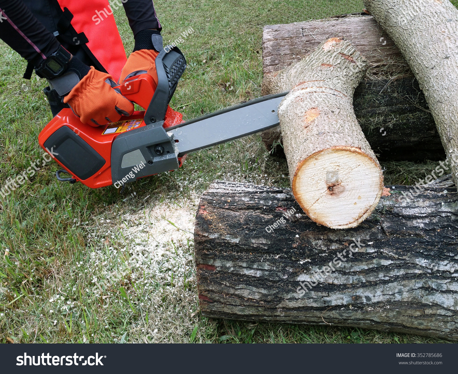 Tree Cutter Professional Tree Cutter Using Battery Operated Stock Photo Edit