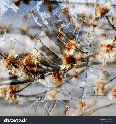 Abstract Spring Flowers Background Through Glass Stock Photo 589872236 - Shutterstock