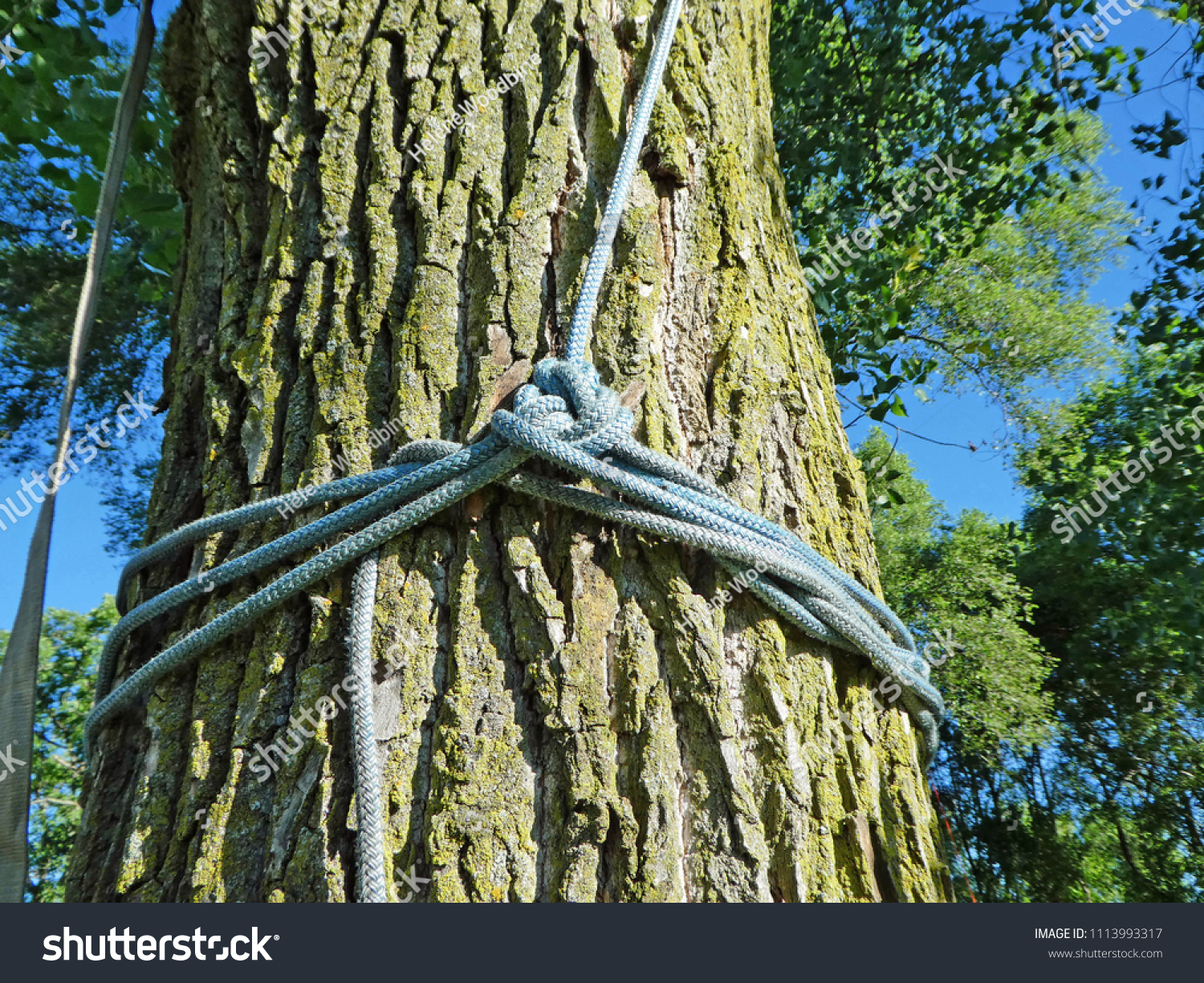 Tree Cutter Arborist Tree Cutters Rope Knotted On Stock Photo Edit Now