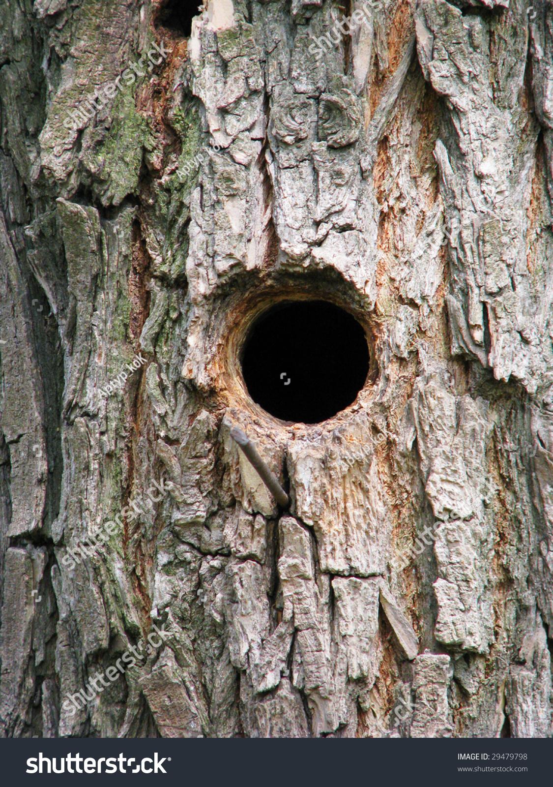 Birch Tree Fall Wallpaper Close Up Bird House Bark Tree Hollow Invoice Stock Photo 29479798