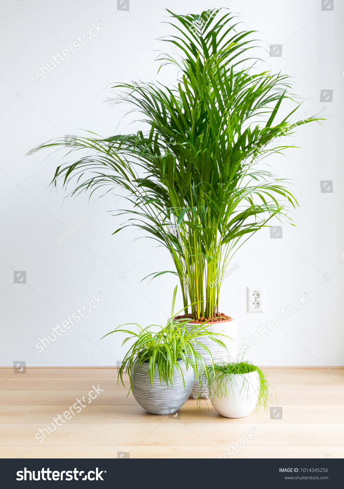 Chrysalidocarpus Space For Life Bright Living Room Houseplants On Floor Stock Photo Edit Now
