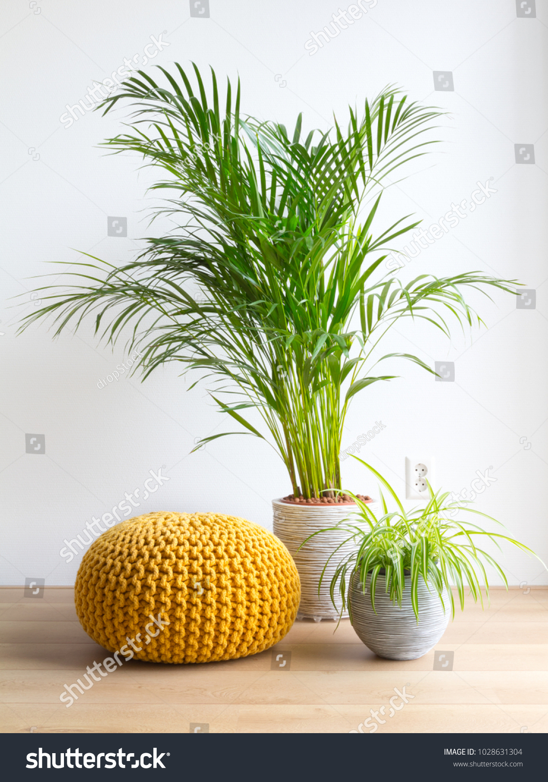 Chrysalidocarpus Space For Life Bright Living Room Palm Spiderplant Pouf Stock Photo Edit Now