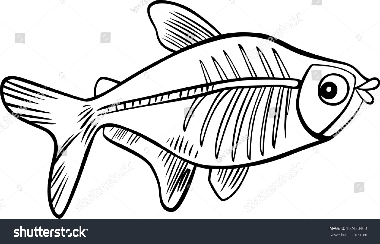 X ray coloring sheets -  Xray Fish Coloring Book Stock Illustration Download