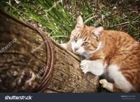 Cat Climbs Pole Stock Photo 293577089 - Shutterstock