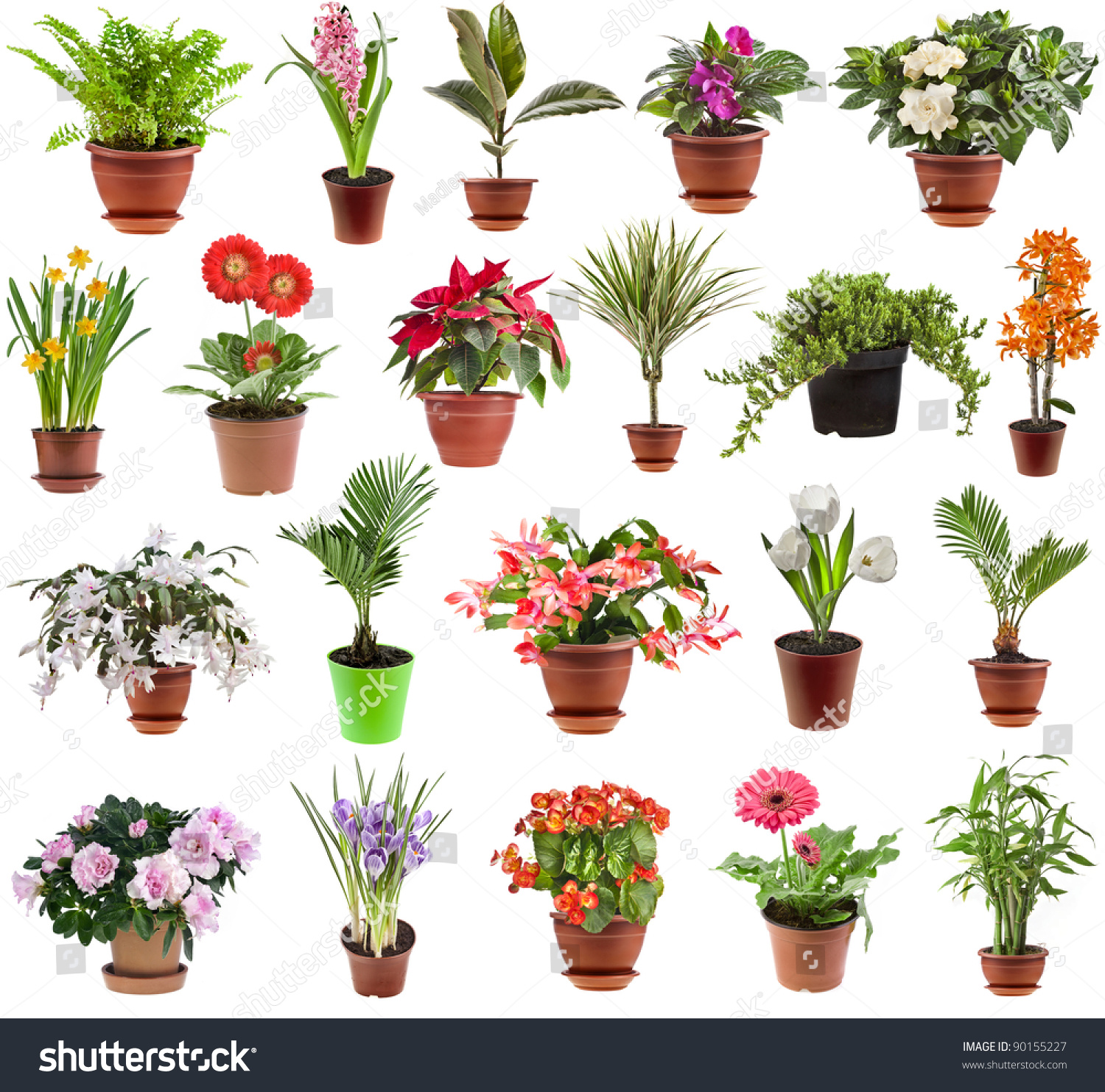 Pictures Of Flowering House Plants Collection Set Houseplants Flower Pot Isolated Stock Photo