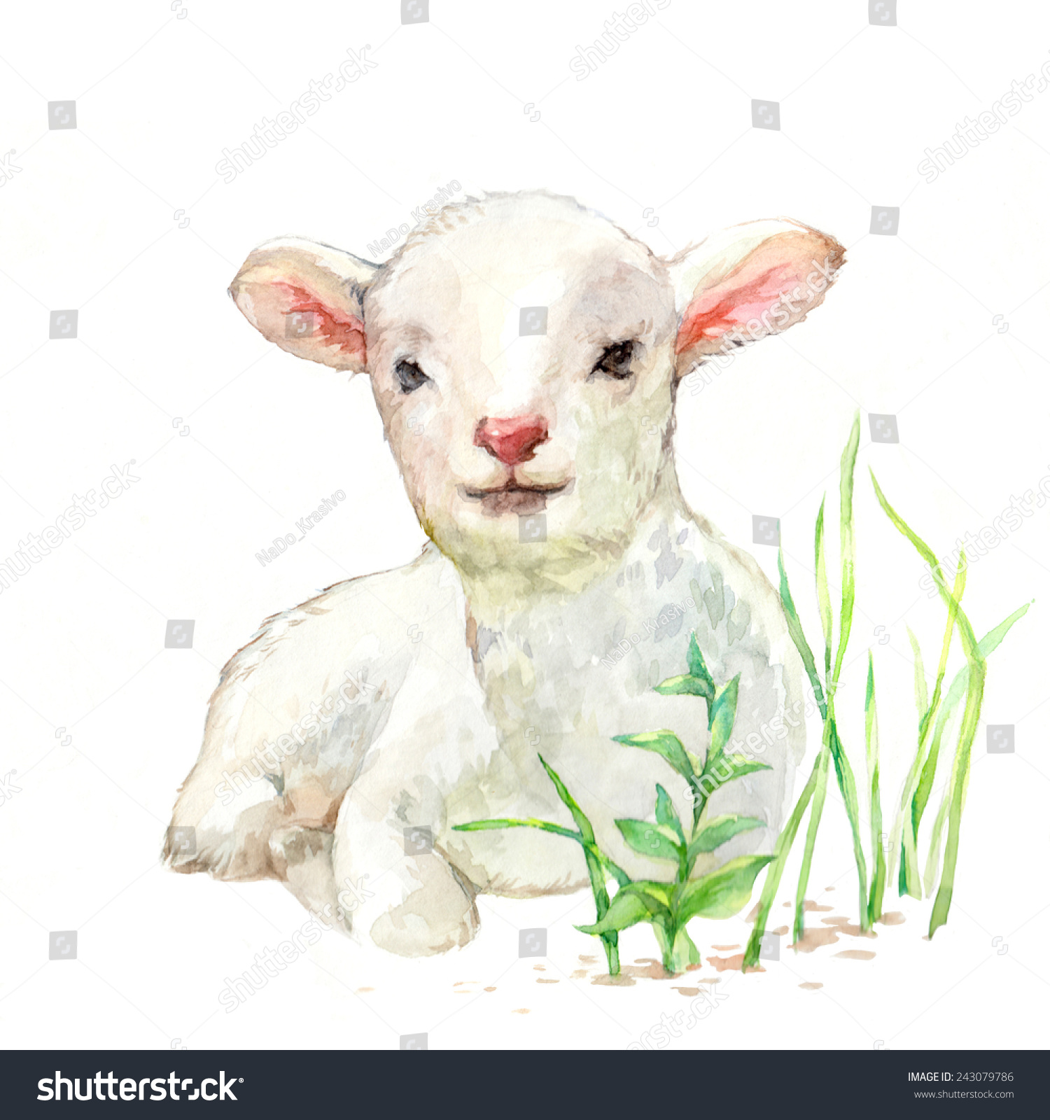Baby Lamb Drawing Cute Little Lamb On White Background Stock Illustration