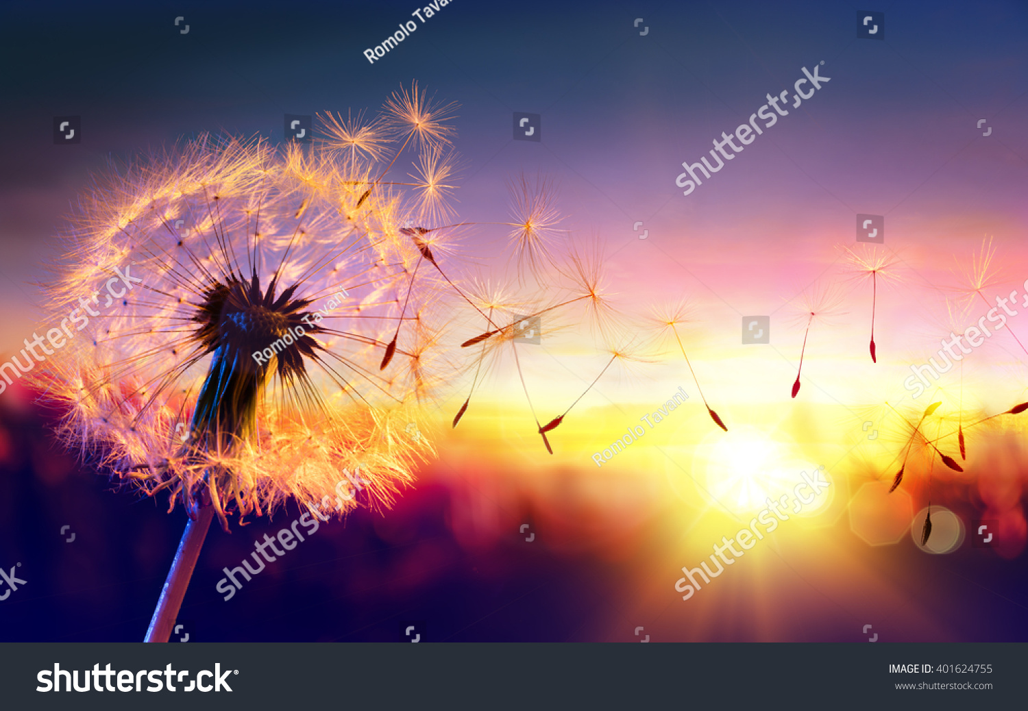 Freedom Picture Dandelion Sunset Freedom Wish Stock Photo 401624755