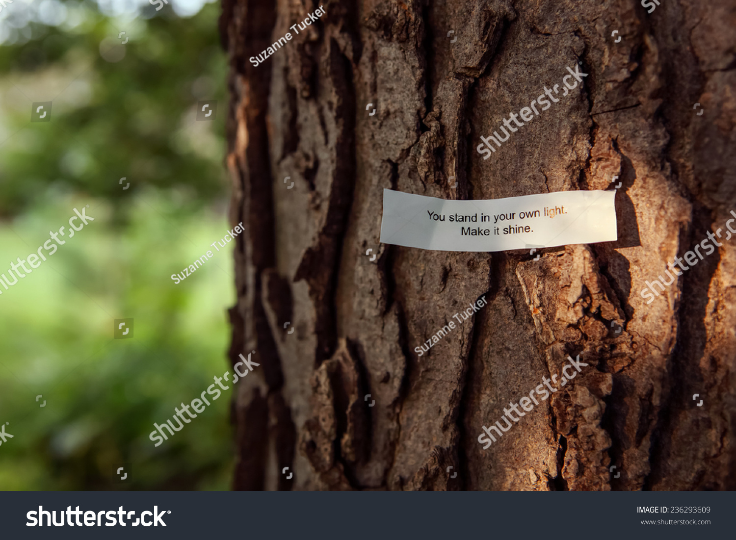 How To Make Your Own Tree Stand Fortune Message You Stand Your Own Stock Photo Edit Now