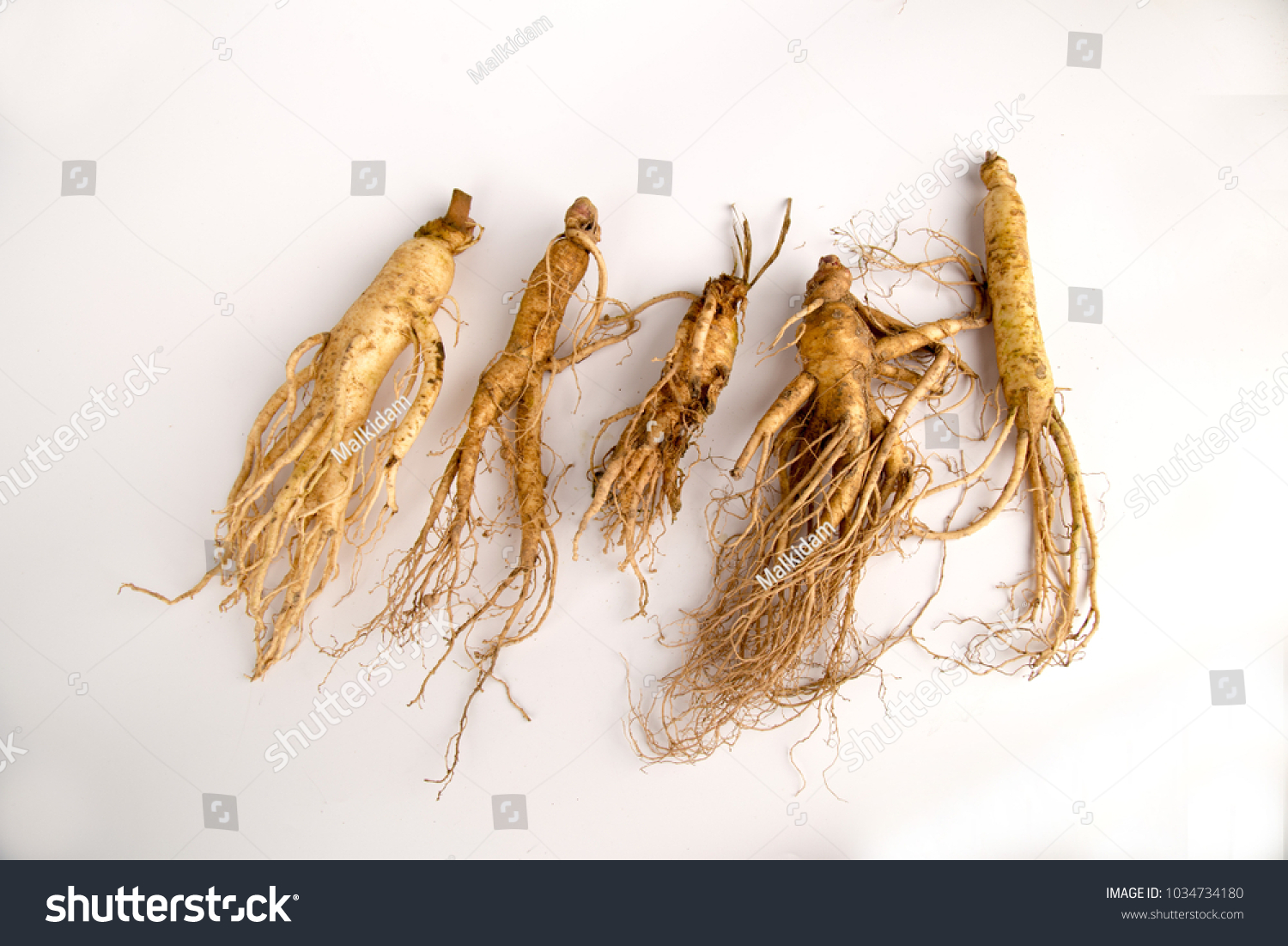 Ginseng Pflanze Ginseng Root On White Background Stock Photo Edit Now 1034734180