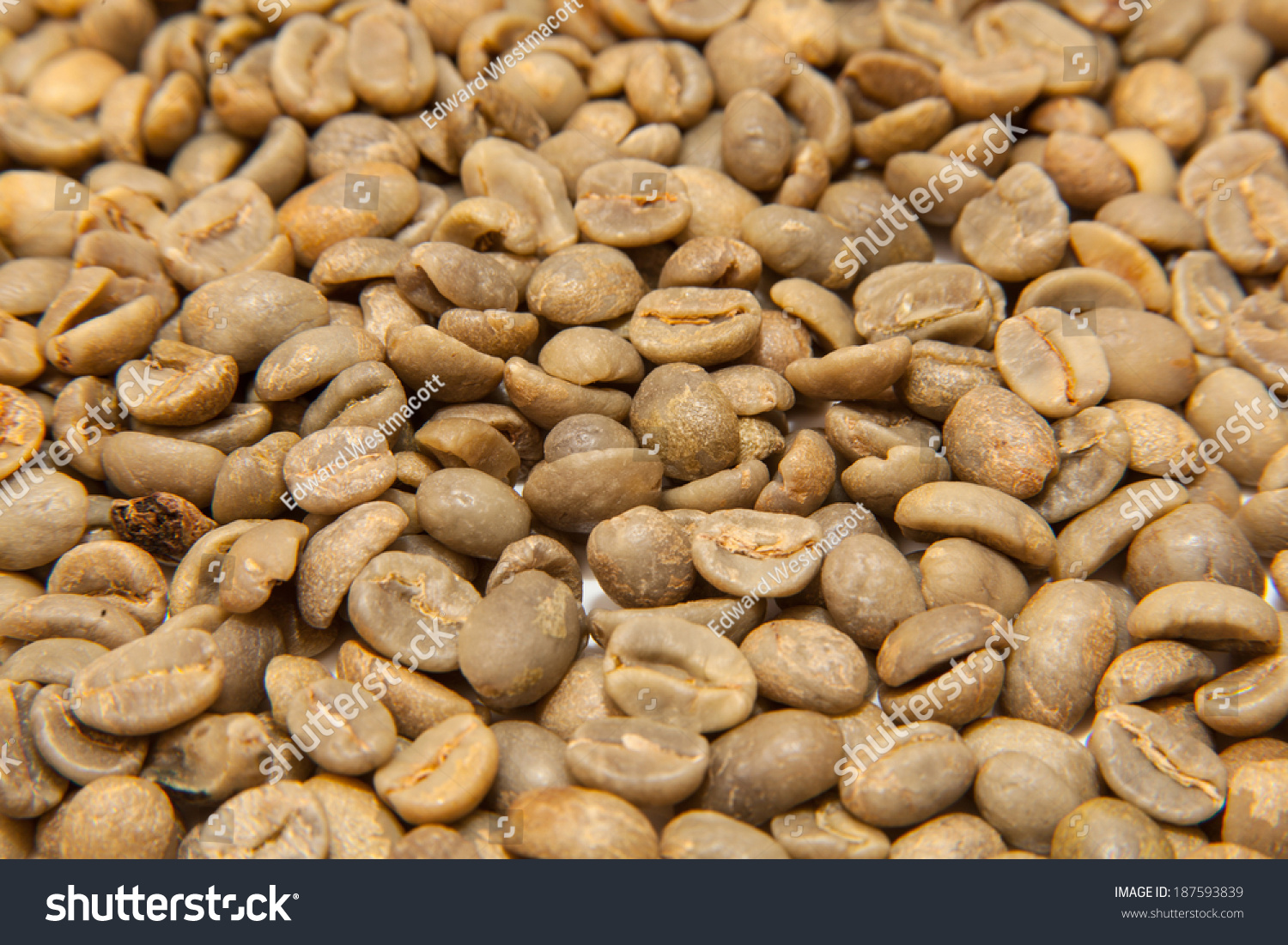 Unroasted Organic Arabica Coffee Beans Green Unroasted Arabica Coffee Beans Stock Photo 187593839