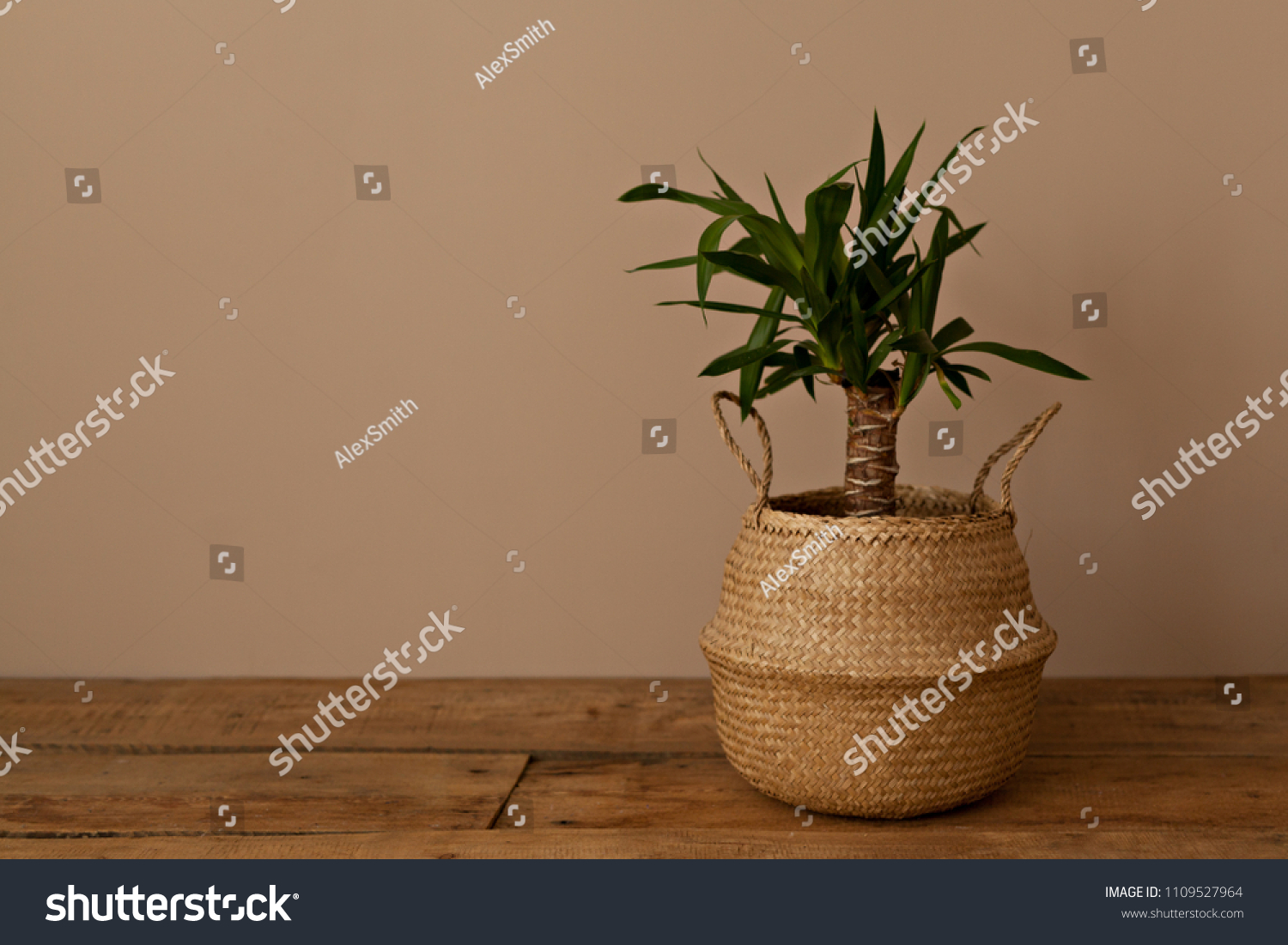 Chrysalidocarpus Space For Life Home Plans Braided Pot Background Beige Stock Photo Edit Now