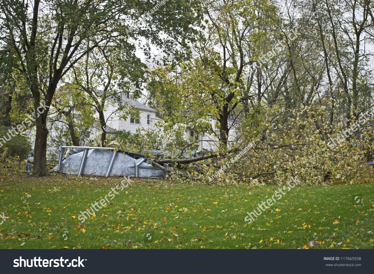 Asian Garden Zofingen Manalapan New Jerseyusaoctober 30 Downed Tree Stock Photo Edit Now