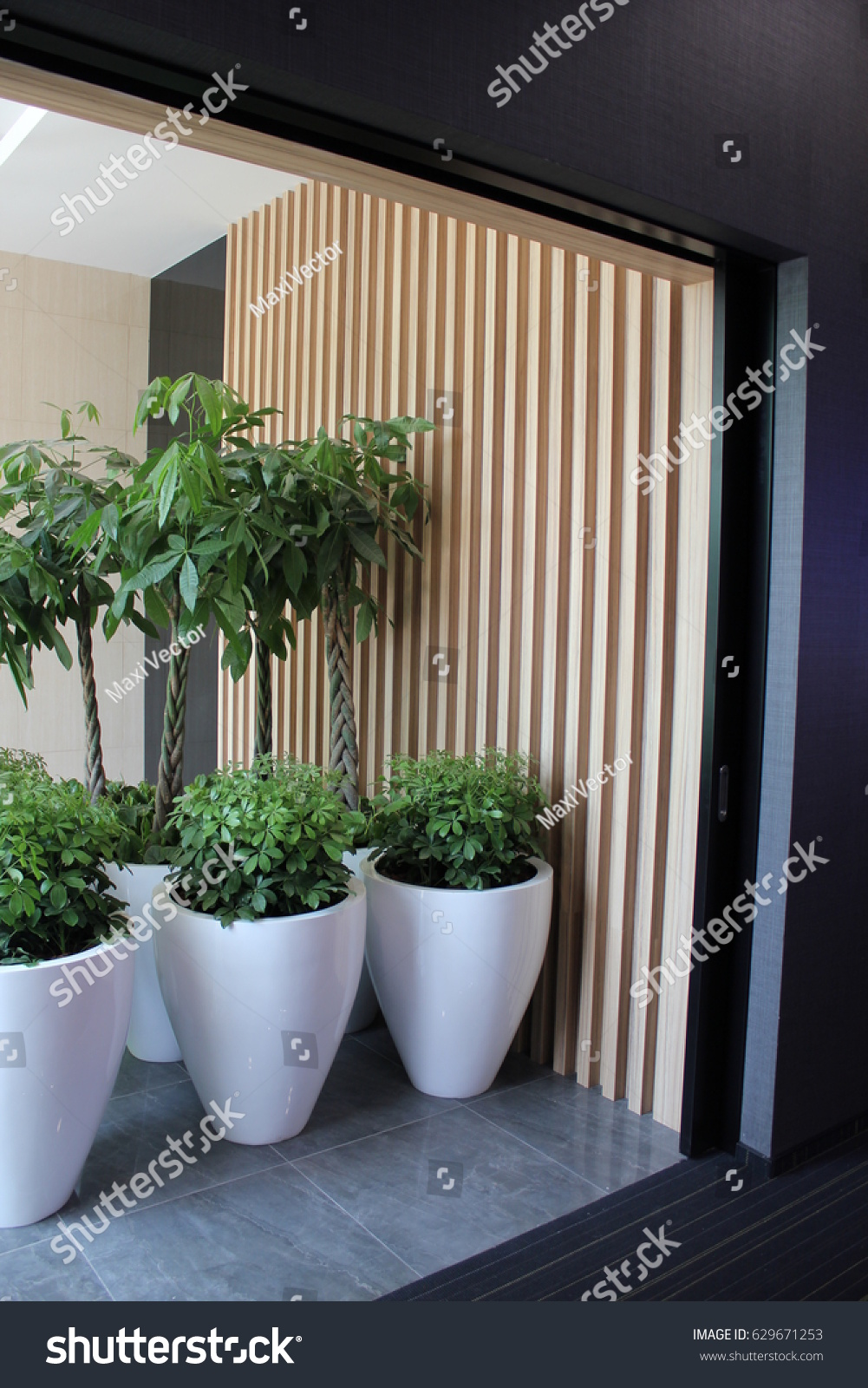Indoor Plants For The Office Office Interior Indoor Plants Large White Stock Photo Edit Now