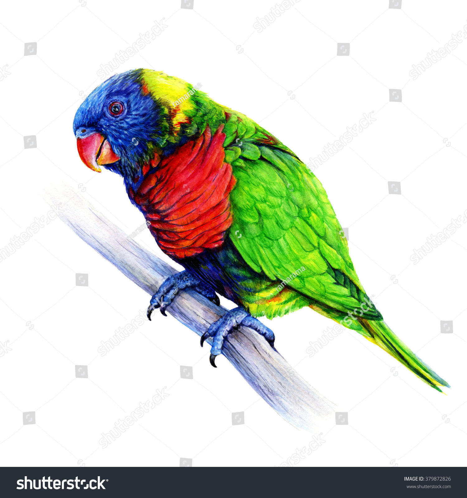 Lutter Contre Les Fourmis Naturellement Digital Painting Of Rainbow Lorikeet Parrots Stock Photo