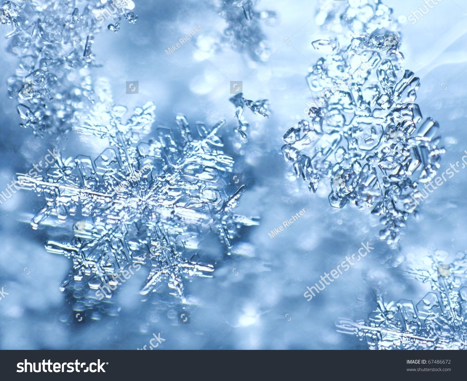 Snow Falling Wallpaper Download Real Snowflakes Stock Photo 67486672 Shutterstock