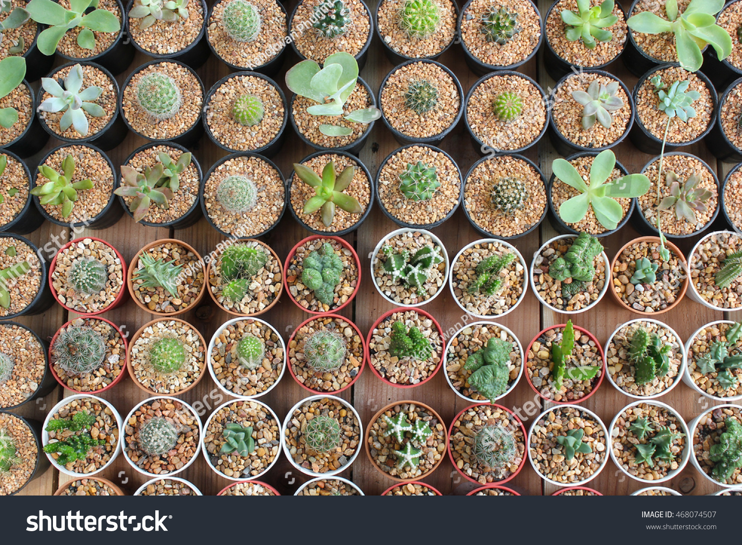 Cactus Pots For Sale Small Cactus Flower Pot Cactus Sale Stock Photo 468074507