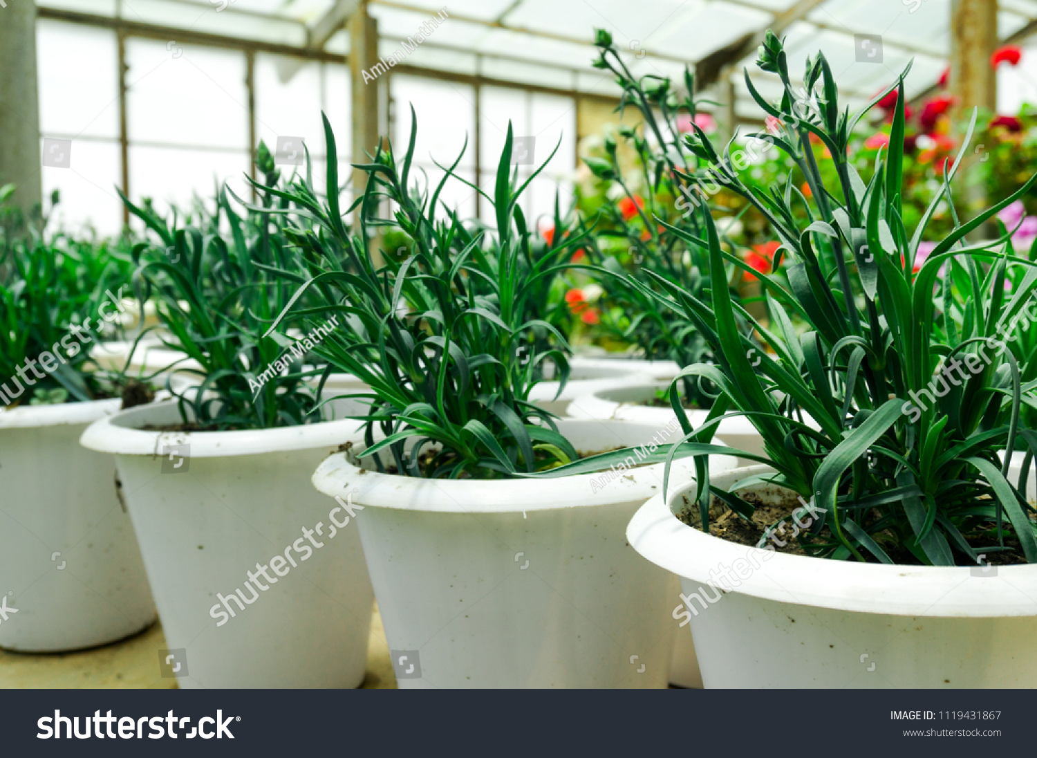 Small House Plants With Flowers Small House Plants Flowers Growing White Stock Photo Edit Now