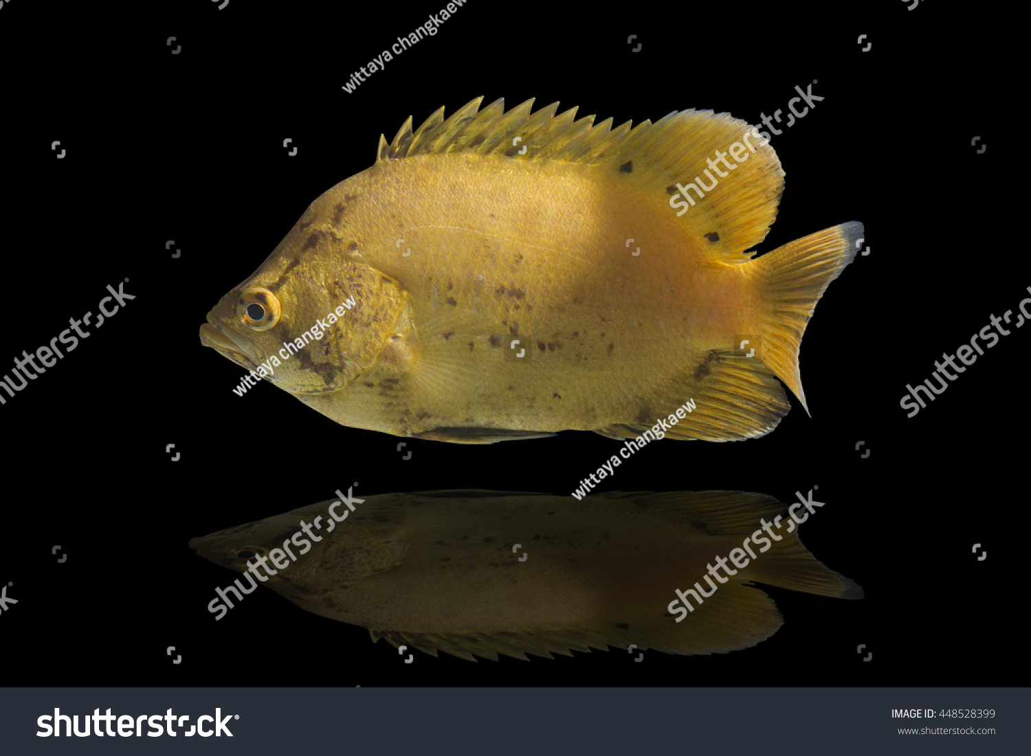 Baby Cod Swimming Fishjumping Cod Fishbaby Fish On Stock Photo Edit Now