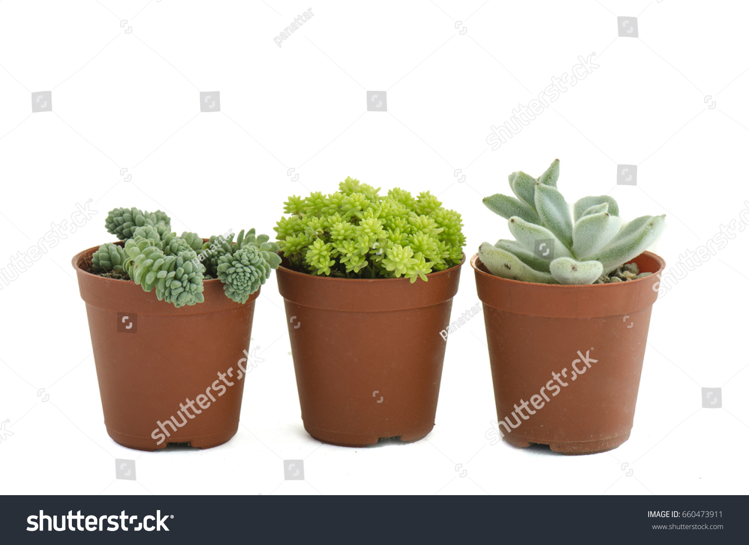 Cactus Planting Pots Various Type Succulent Cactus Plant Pots Stock Photo Edit Now