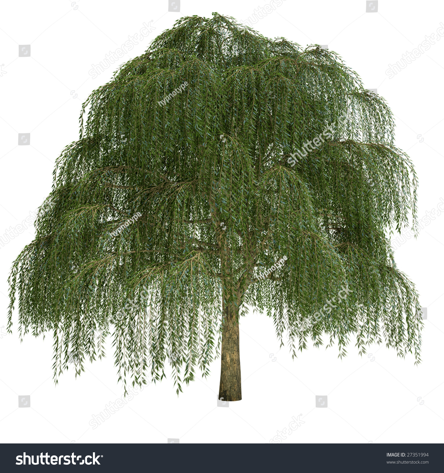 Fall Leaf Pattern Wallpaper Willow Tree Isolated On White Background Stock