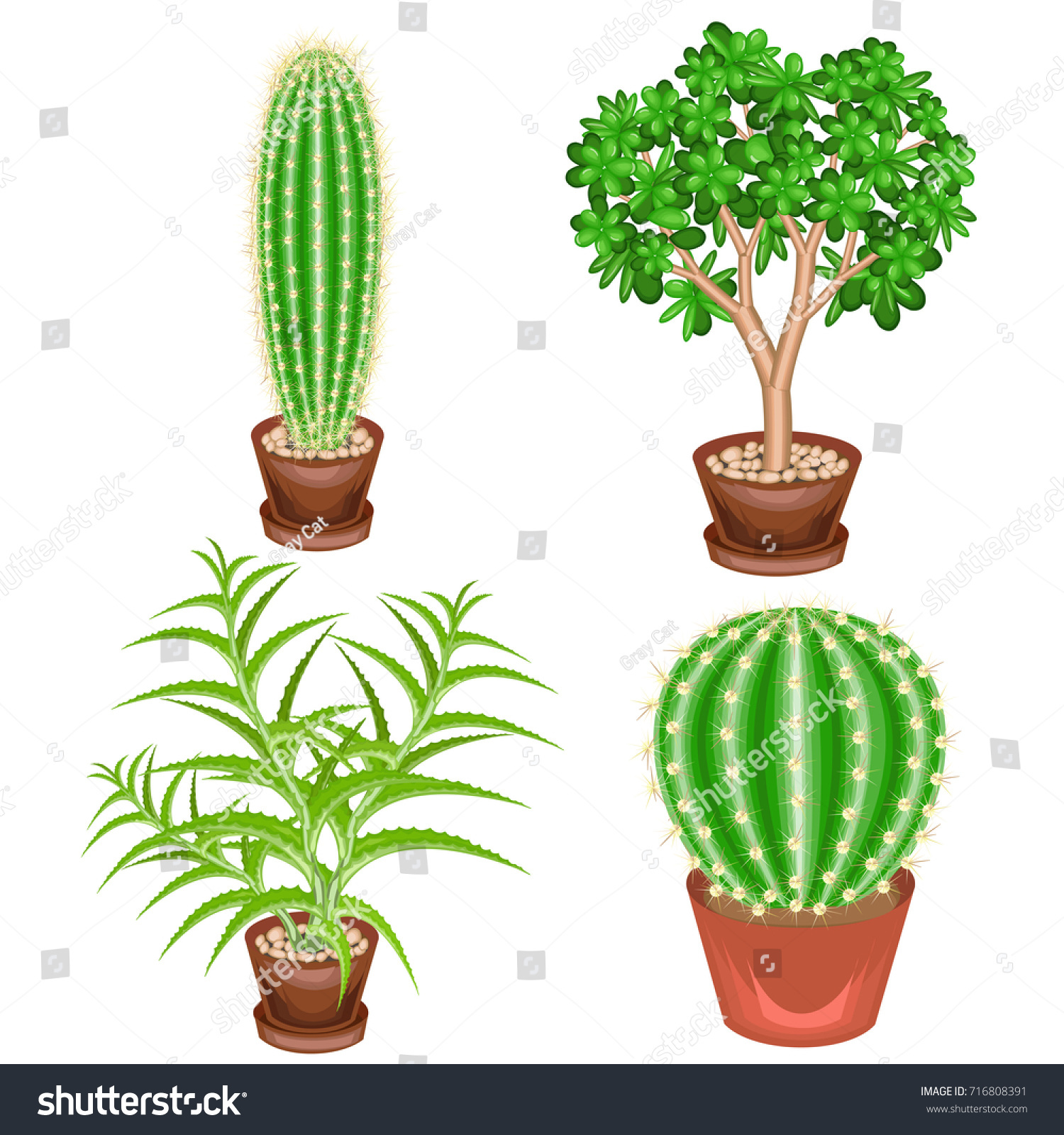 Aloe Vera Kaktus Collection Houseplants Pots Cactus Crassula Aloe Stock Vector