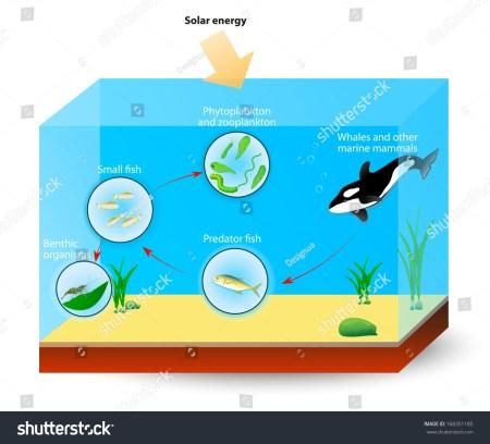 Producer Marine Biology