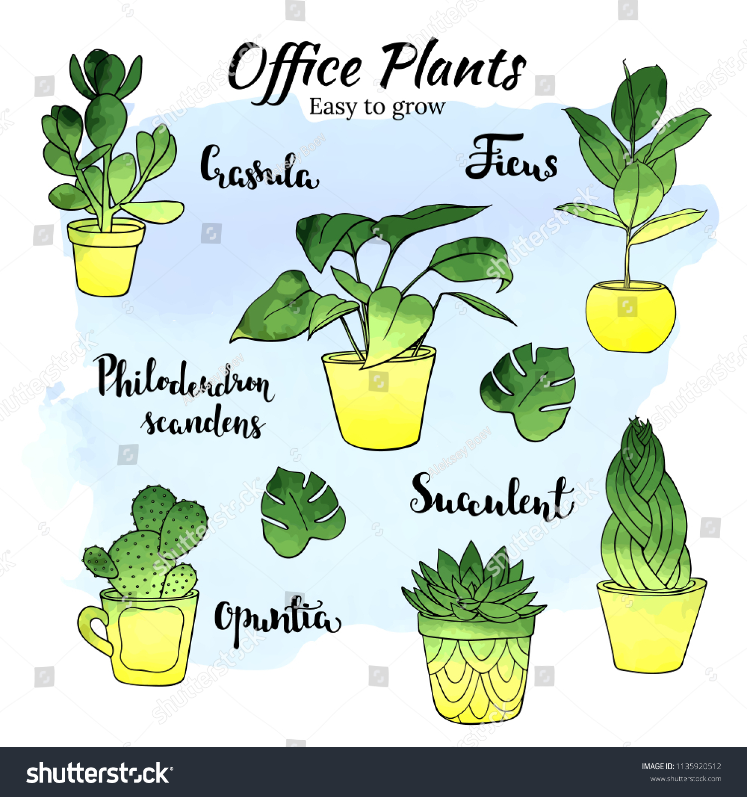 Indoor Plants For The Office Office Indoor Plants Vector Hand Drawn Stock Vector Royalty Free