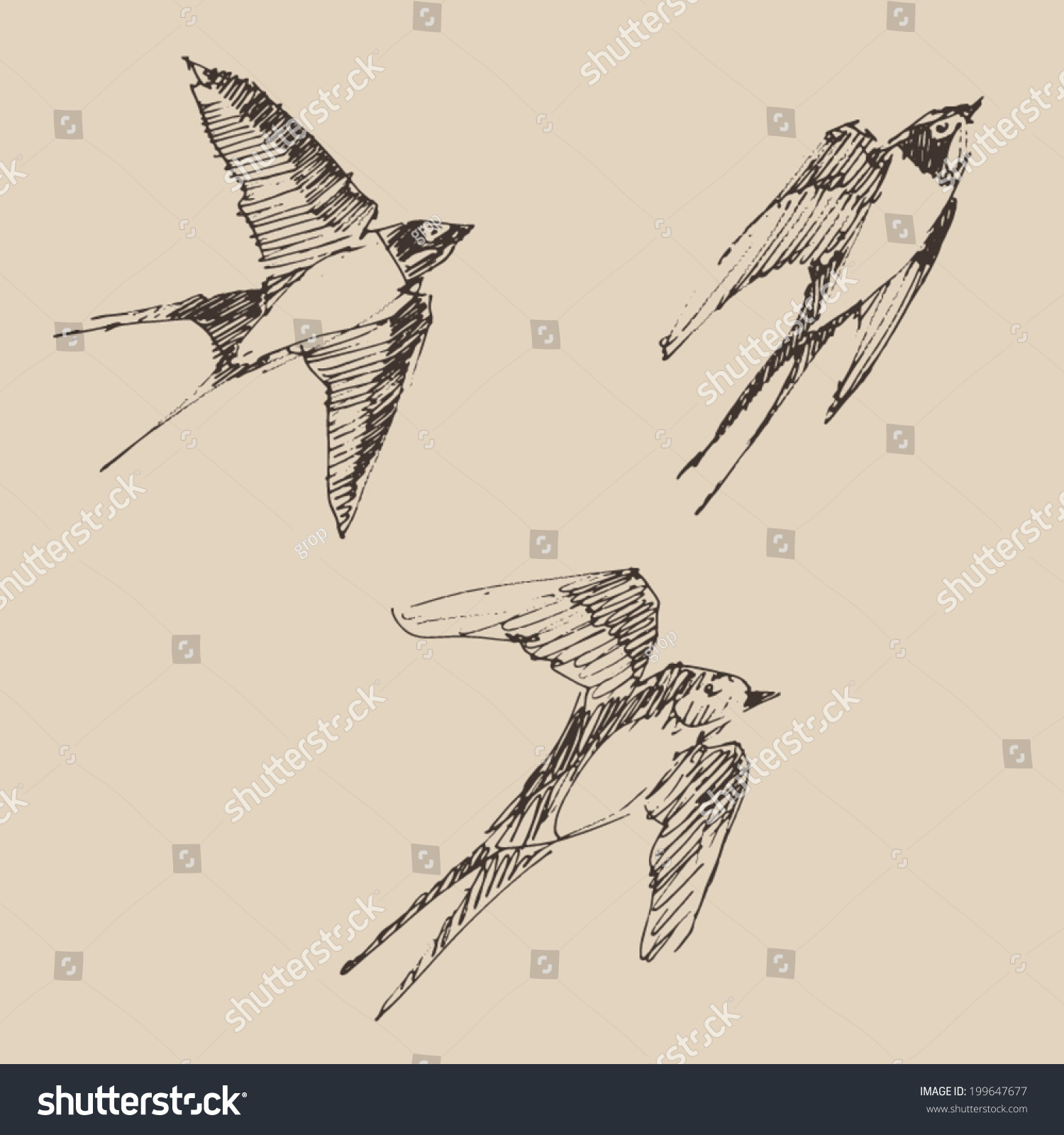 Swallows flying bird set collection vintage illustration engraved retro style hand drawn