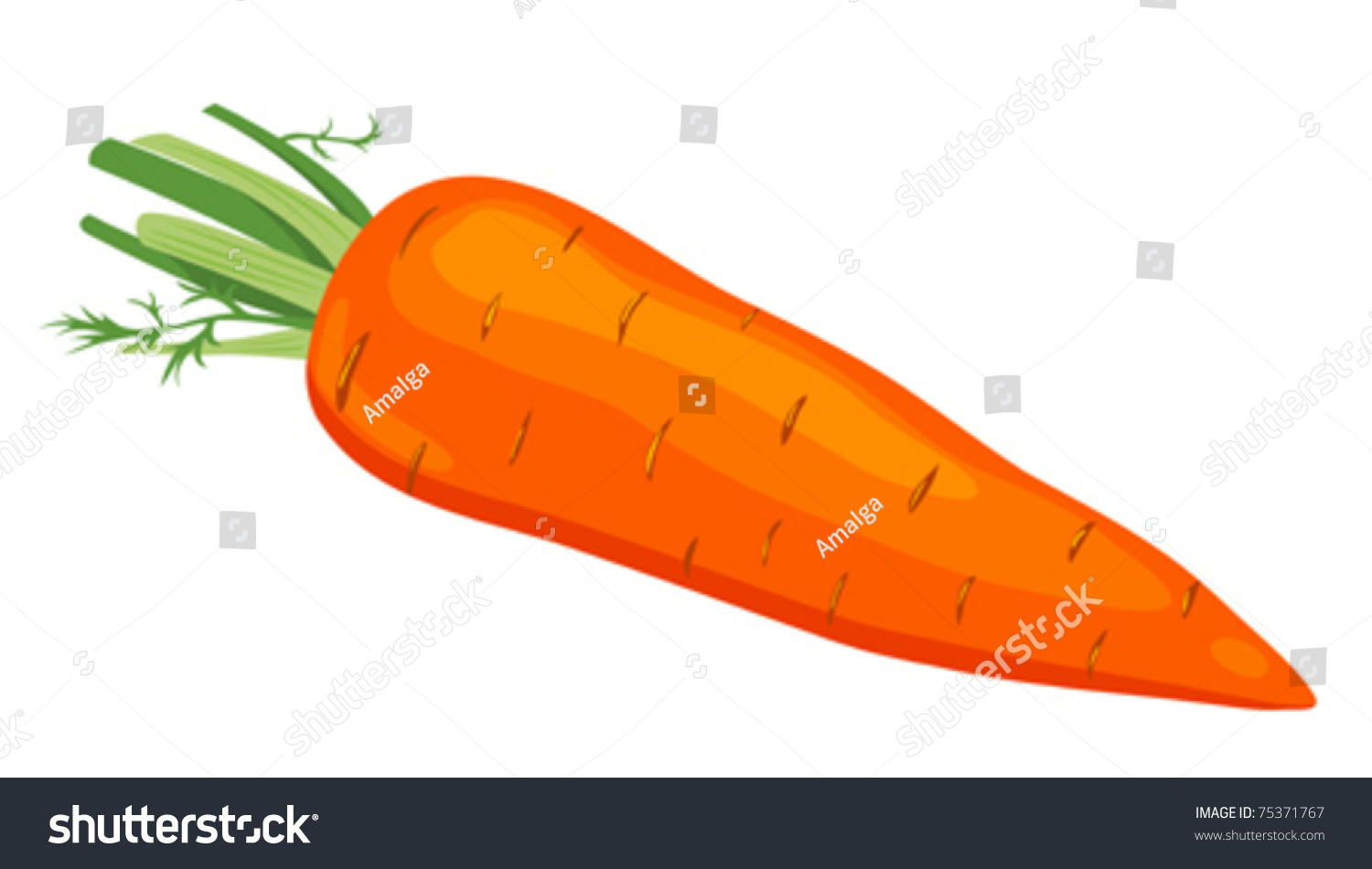 The Carrot Vector Illustration Isolated On White