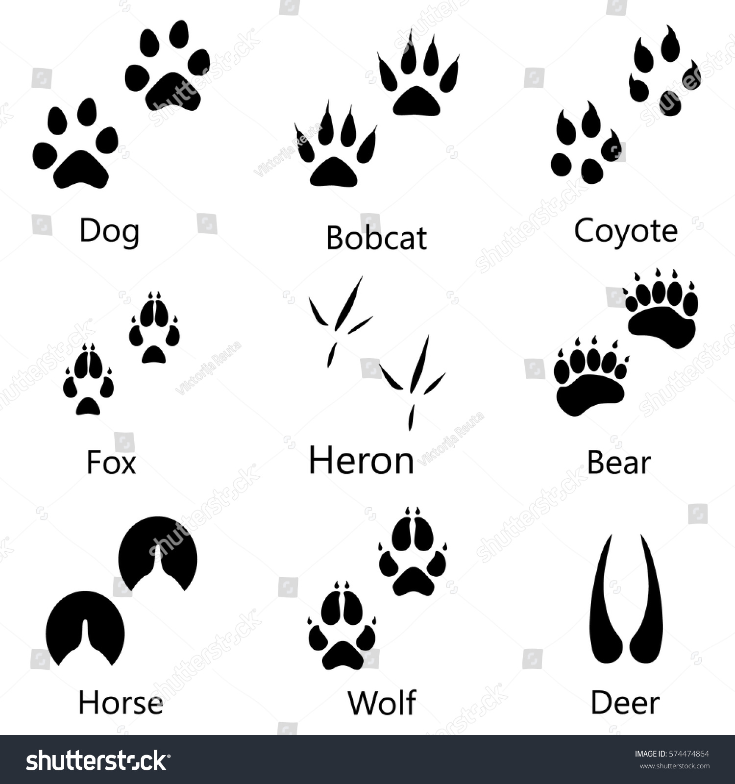 wild animals pictures with names