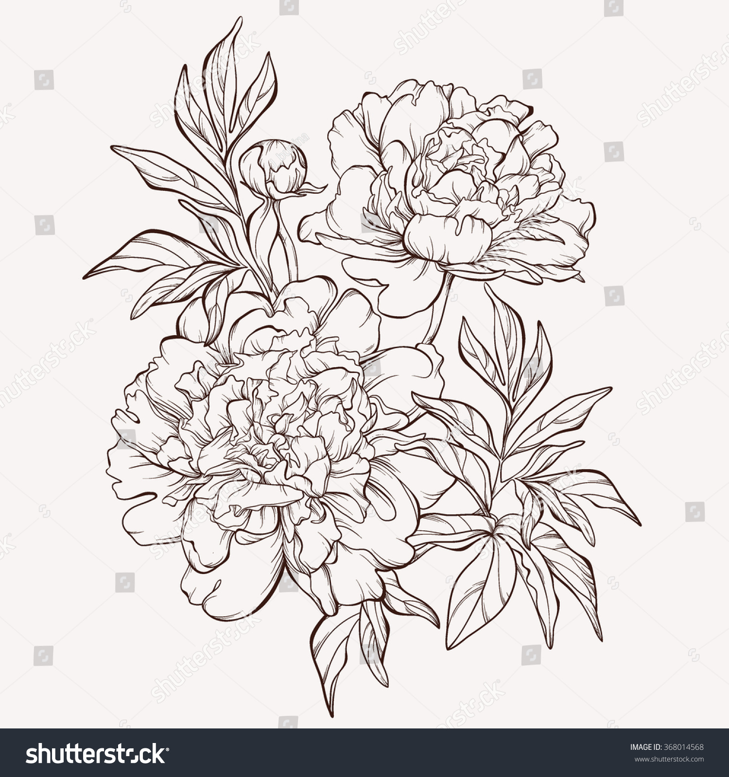 Vector peony flower isolated on white background element for design hand drawn contour
