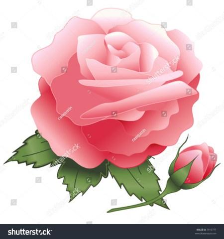 Rose Leaf Buds