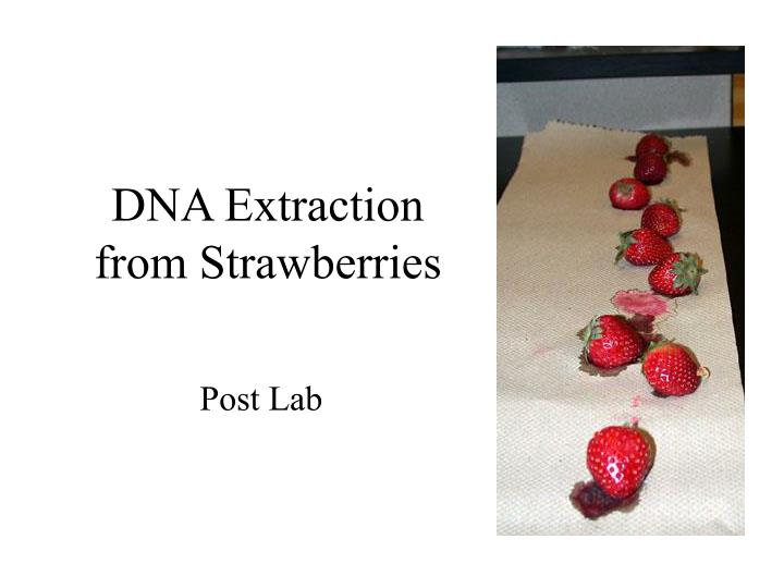 PPT - DNA Extraction from Strawberries PowerPoint Presentation - ID