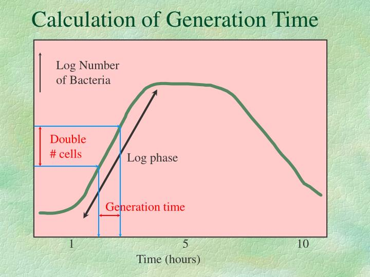 PPT - Growth and Multiplication of Bacteria PowerPoint Presentation