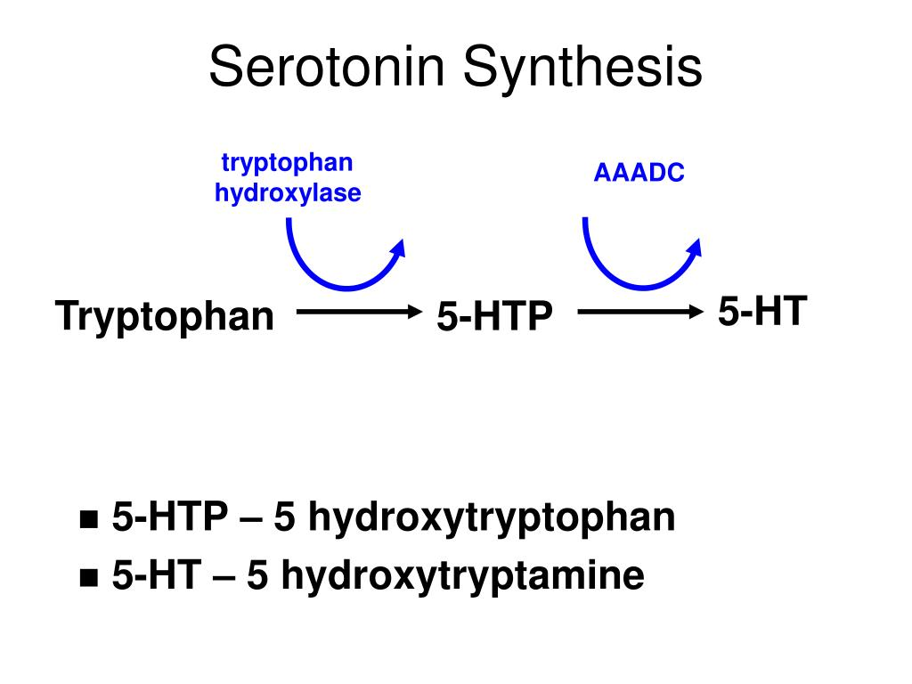 Tryptophan Serotonin Ppt Neurotransmitters Monoamines Powerpoint