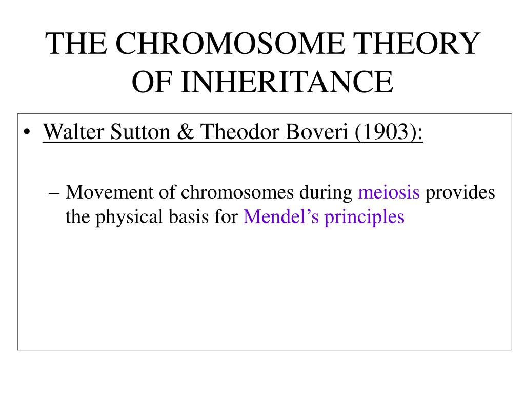 Chromosome Theory Ppt - Post Mendelian Genetics Powerpoint Presentation - Id