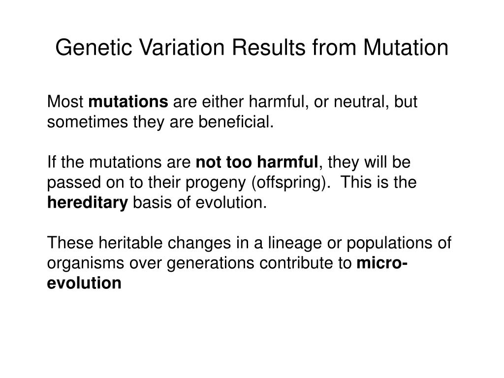 Chromosome In A Sentence Ppt Microbial Genetics From Genotype To Phenotype