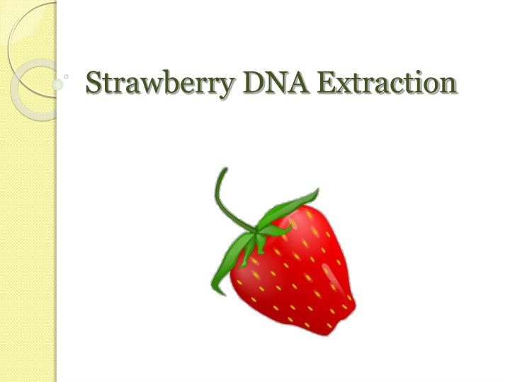 PPT - Strawberry DNA Extraction PowerPoint Presentation - ID524226