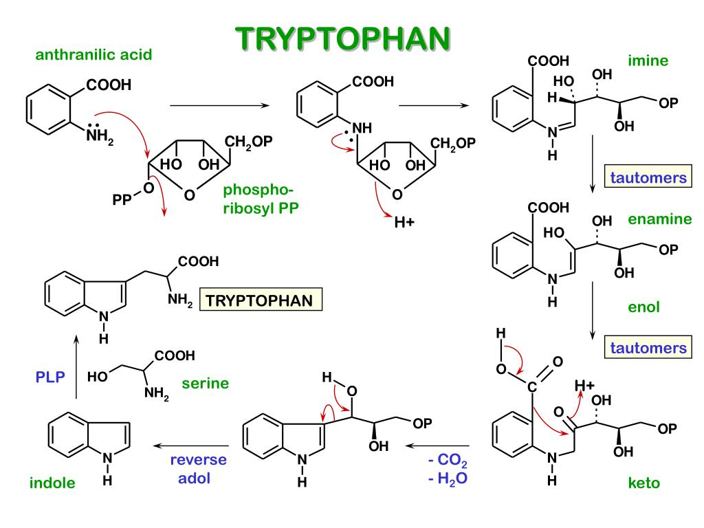 Tryptophan Serotonin Ppt Biosynthesis Of Indole Alkaloids Powerpoint