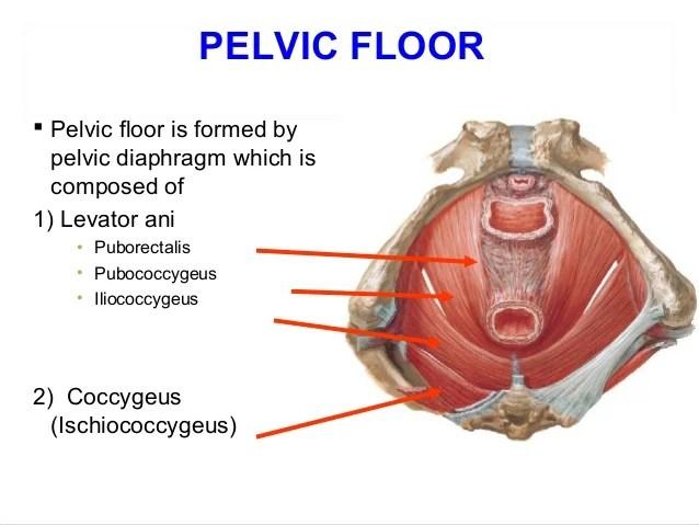 Beautiful Applied Anatomy Of Pelvis And Fetal Skull Usefulresults