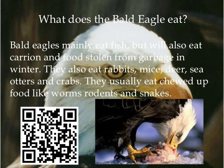 Newborn Babies Eat How Much Bald Eagles2